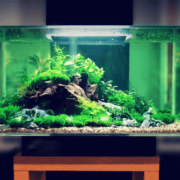 best beta fish tanks